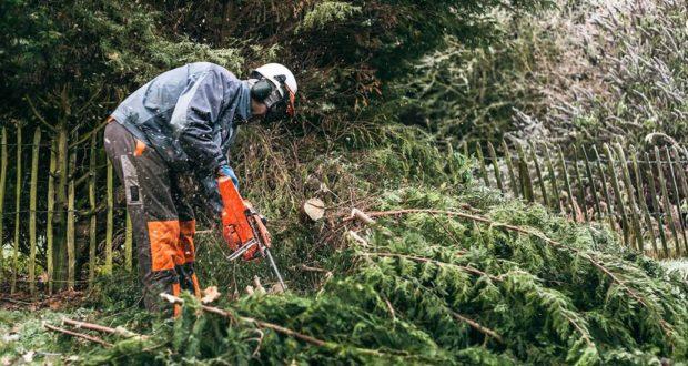 Cégünk elérhető árakon foglalkozik veszélyes fák profi kivágásával.