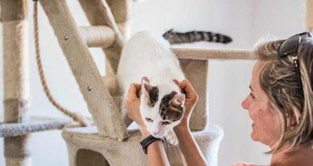 Remek macska panzió árak várják Önt is!