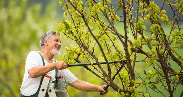 Remek áron igényelhet profi kertrendezést.