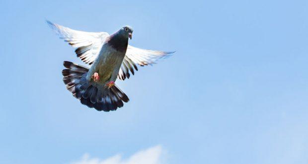 madárriasztó